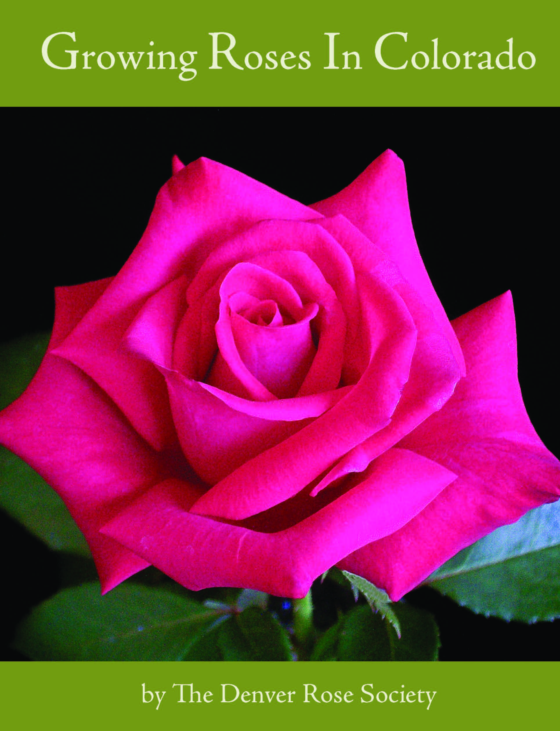 The Denver Rose Society's definitive guide to growing beautiful roses in Colorado